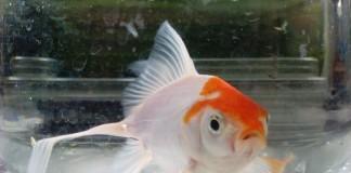 acuario-udenar-periodico