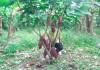 maetria-en-agroforesteria-tropical-udenar-periodico